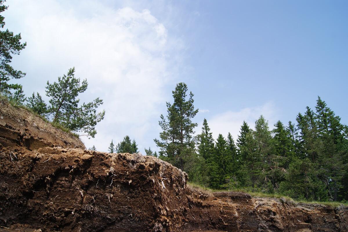 Teilansicht einer Moorlandschaft mit Baumbewuchs