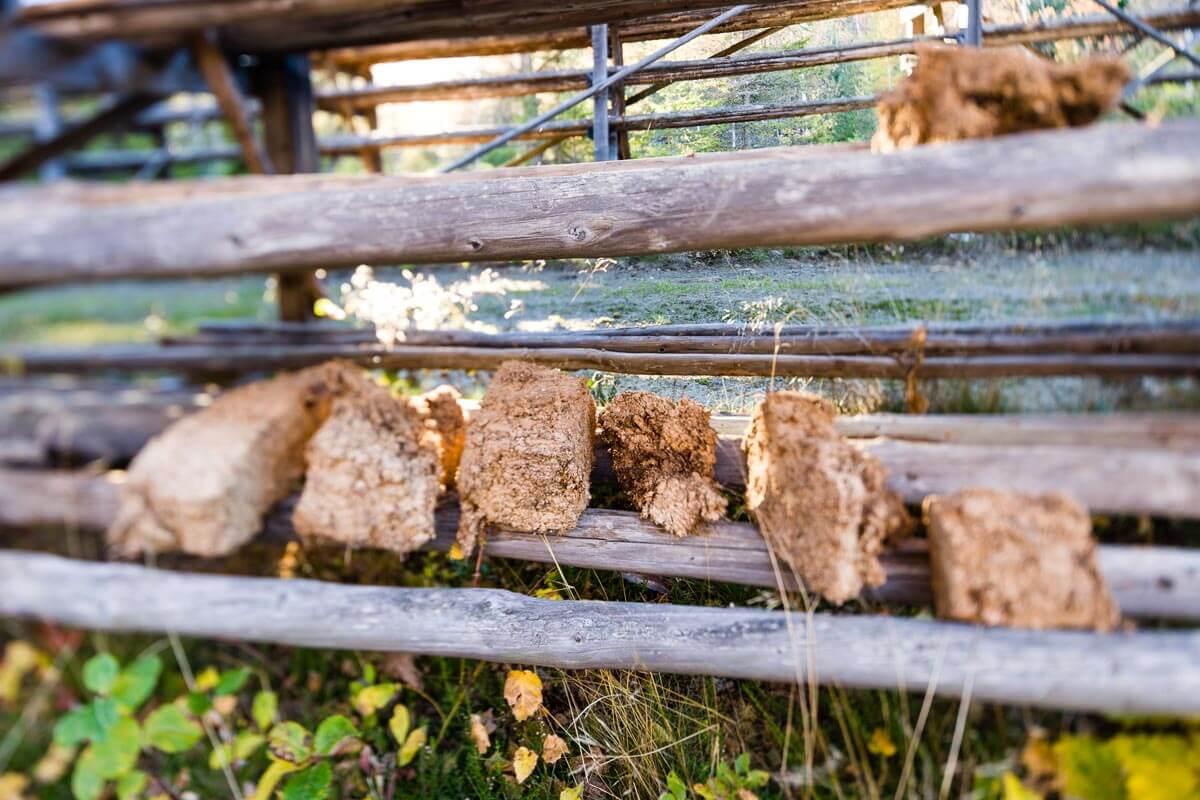 Moorwürfel aus dem Hochmoor von Garanas zum Trocknen aufgelegt